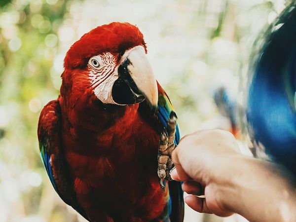 how much is a parrot